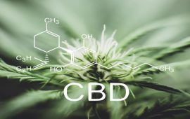 Hemp Oil vs CBD Oil: Understanding the Difference