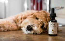 CBD for Pets: Should You Give Your Cat or Dog CBD oil?