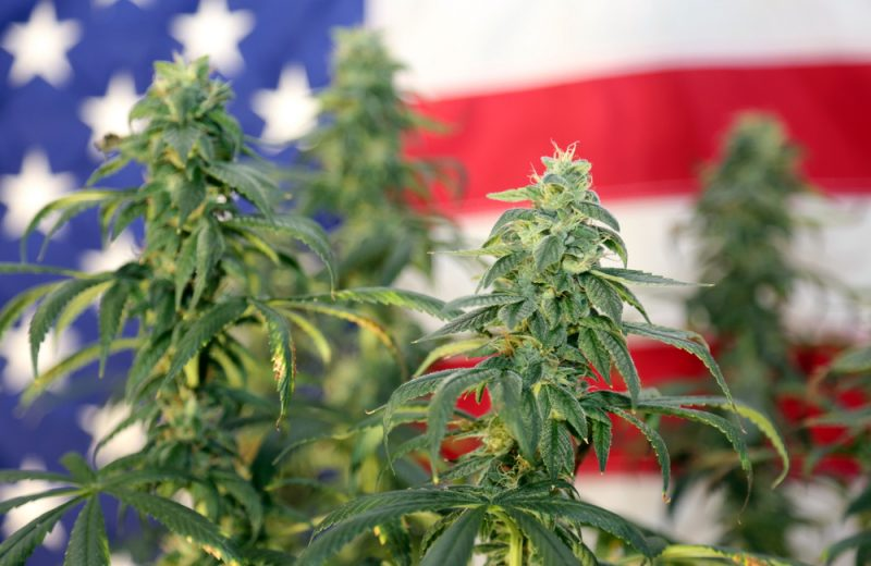 US Government and CBD Oil