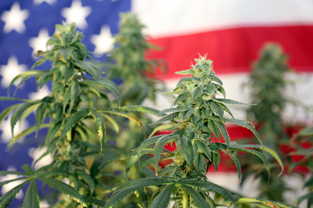 What Will the US Government do about CBD Oil?