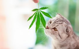 Study: 80% of Canadian Pet Owners Purchased CBD