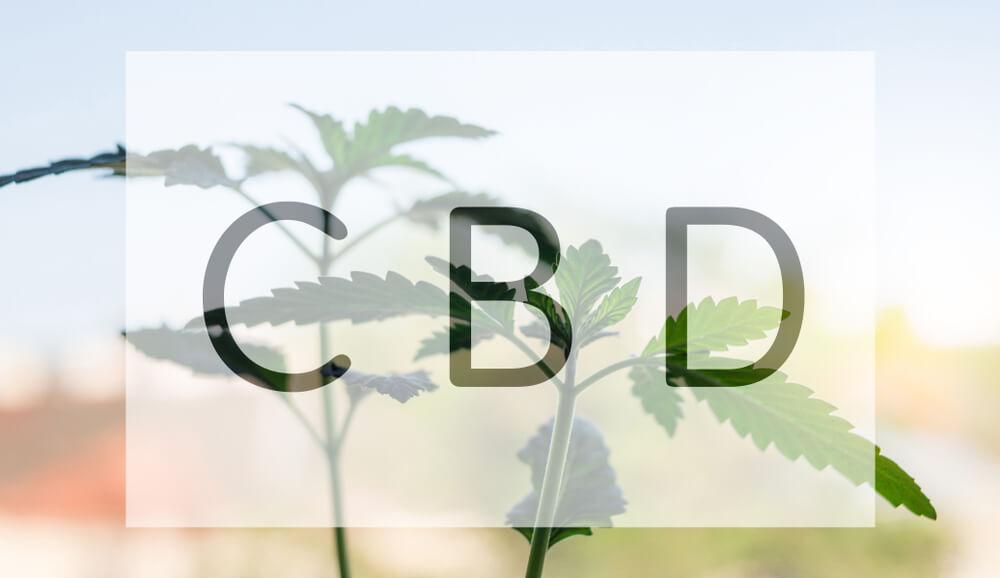 Hawaii Legislature Seeks Legal Standard for Unregulated CBD Products