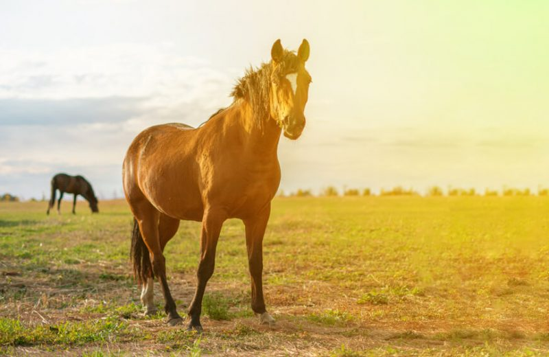 cbd on horses
