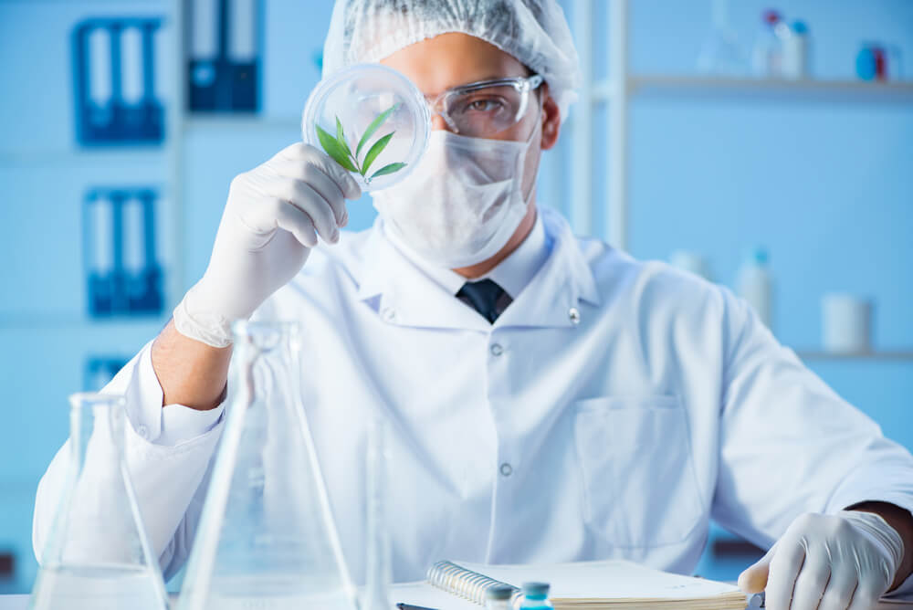 8 Pennsylvania Universities Set to Conduct Cannabis Research