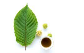 Can You Buy Kratom Tea Everywhere in the US?