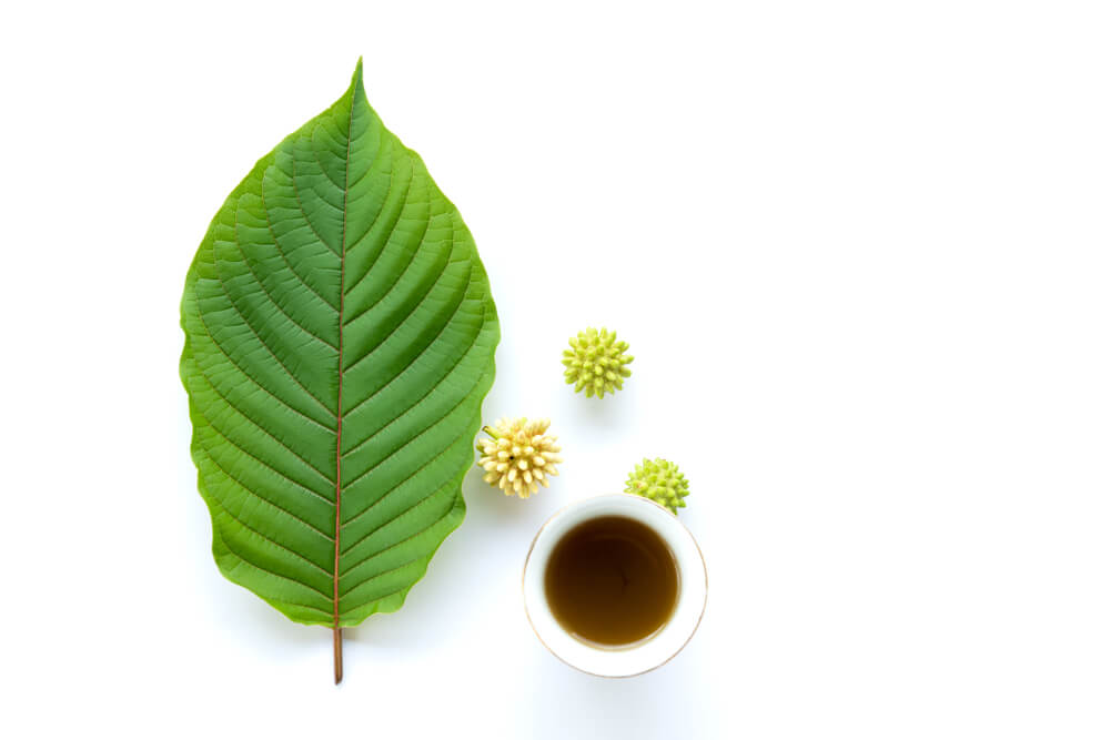 Can You Buy Kratom Tea Everywhere in the US?