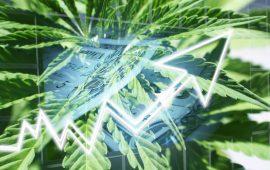 COVID-19 Sparks a Flood of Cannabis Sales