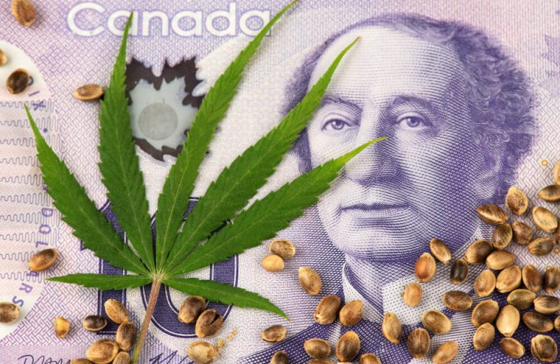 cbd oil in canada concept: canadina dollar bill with marijuana leaf on it