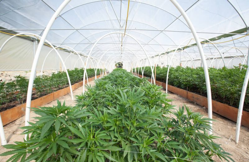 grow weed at home - image of an indoor weed growing facility