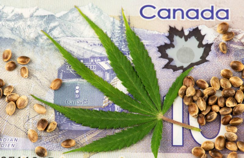 Cannabis Leaf and Seeds on Canadian Dollar currency banknotes. Cannabis Medical Marijuana business concept. Canada Cannabis Leaf Marijuana Sedds Weed Pot Hemp